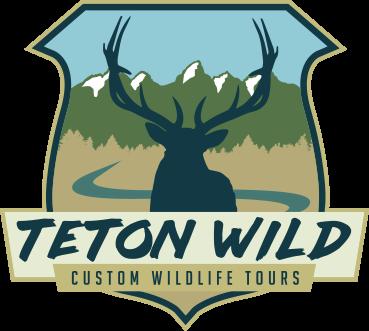 Teton Wild